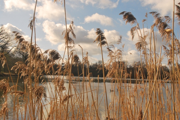 Lake at Whiteknights University of Reading