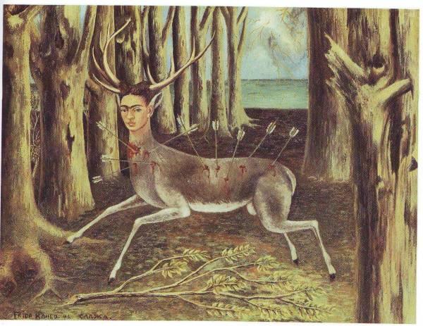 wonded deer