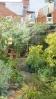 Choisia and herb garden